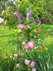 Questo giardino - 14