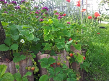 Questo giardino - 15