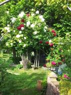 Questo giardino - 4
