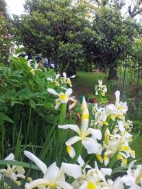 Questo giardino - 8