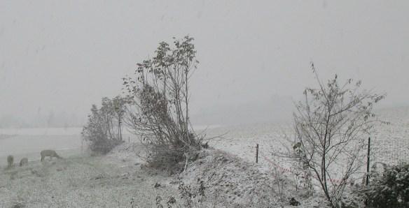 Nevicata  - Dino Schierano